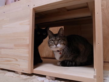 ワル猫2匹