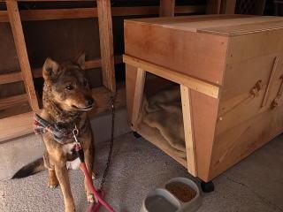 犬小屋購入前の基礎知識
