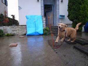 犬小屋設置現場