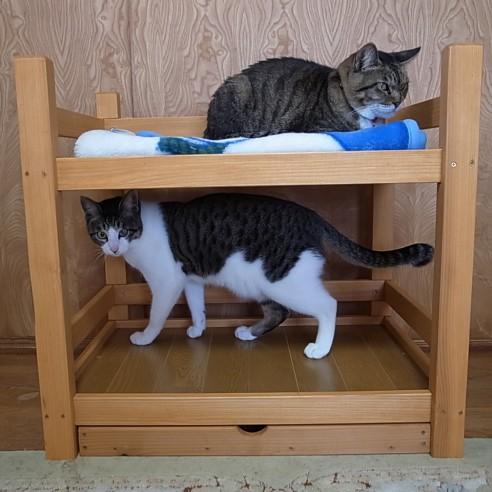 猫の二段ベッド