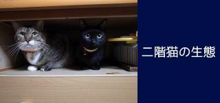 カッサン建築工房の犬と猫